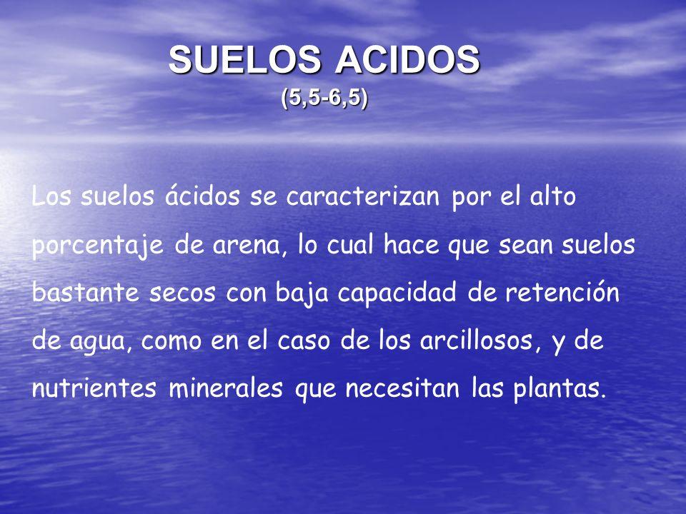 SUELOS ACIDOS (5,5-6,5) Los suelos ácidos se caracterizan por el alto porcentaje de arena, lo cual hace que sean suelos bastante secos con baja capaci