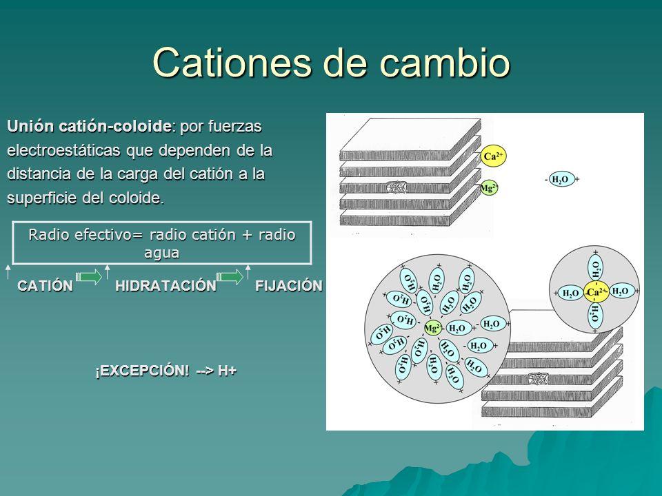 Poder de fijación Según la carga: Según la carga: Al 3+ > Ca 2+, Mg 2+ > K +, Na +, NH 4 +, H + –Tomando en cuenta el radio efectivo, el poder de fijación real: Al 3+ > Ca 2, H + > Mg 2+ > K +, NH 4 + > Na + Los efectos de concentración y dilución afectarán al equilibrio coloide-disolución: [ ] Fijación