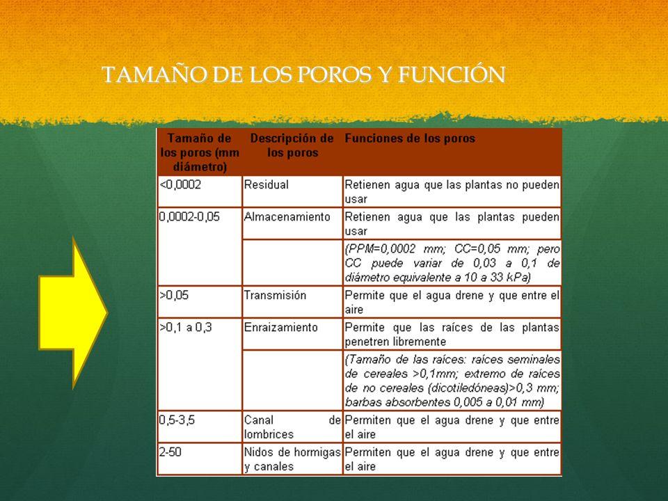 TAMAÑO DE LOS POROS Y FUNCIÓN