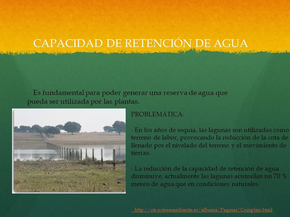 CAPACIDAD DE RETENCIÓN DE AGUA - Es fundamental para poder generar una reserva de agua que pueda ser utilizada por las plantas. PROBLEMÁTICA: - En los