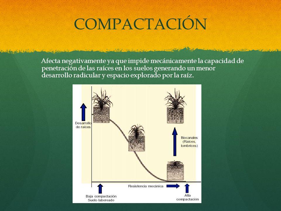 COMPACTACIÓN Afecta negativamente ya que impide mecánicamente la capacidad de penetración de las raíces en los suelos generando un menor desarrollo ra