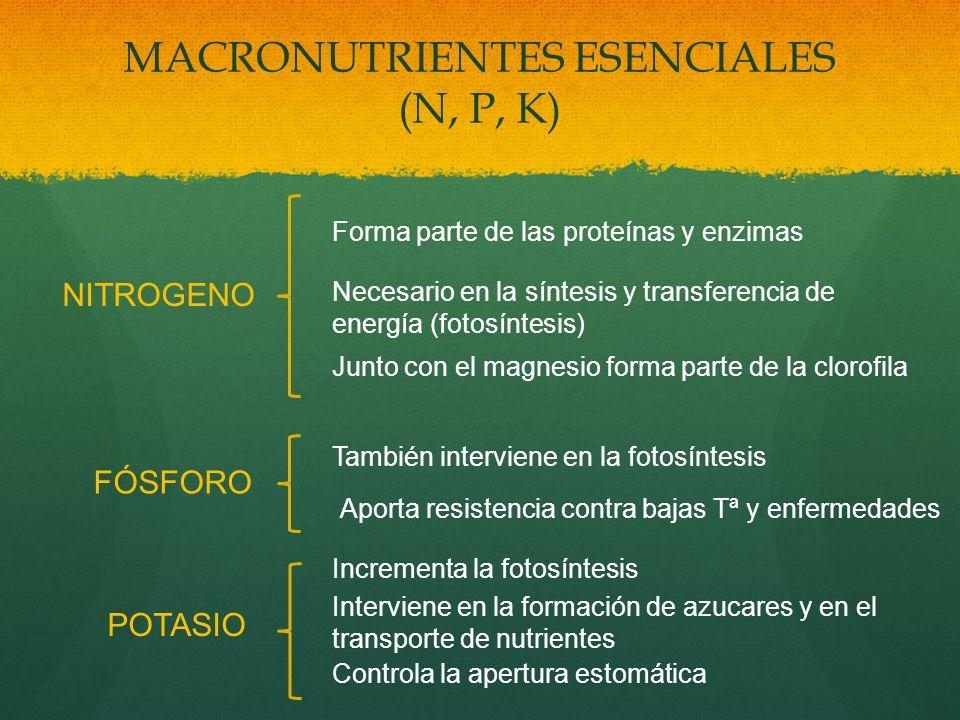 MACRONUTRIENTES ESENCIALES (N, P, K) NITROGENO Forma parte de las proteínas y enzimas Necesario en la síntesis y transferencia de energía (fotosíntesi