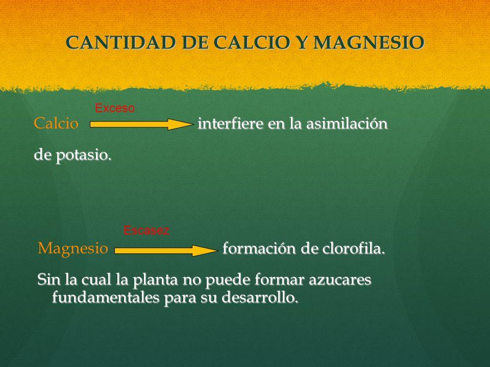 CANTIDAD DE CALCIO Y MAGNESIO interfiere en la asimilación Calcio interfiere en la asimilación de potasio. formación de clorofila. Magnesio formación