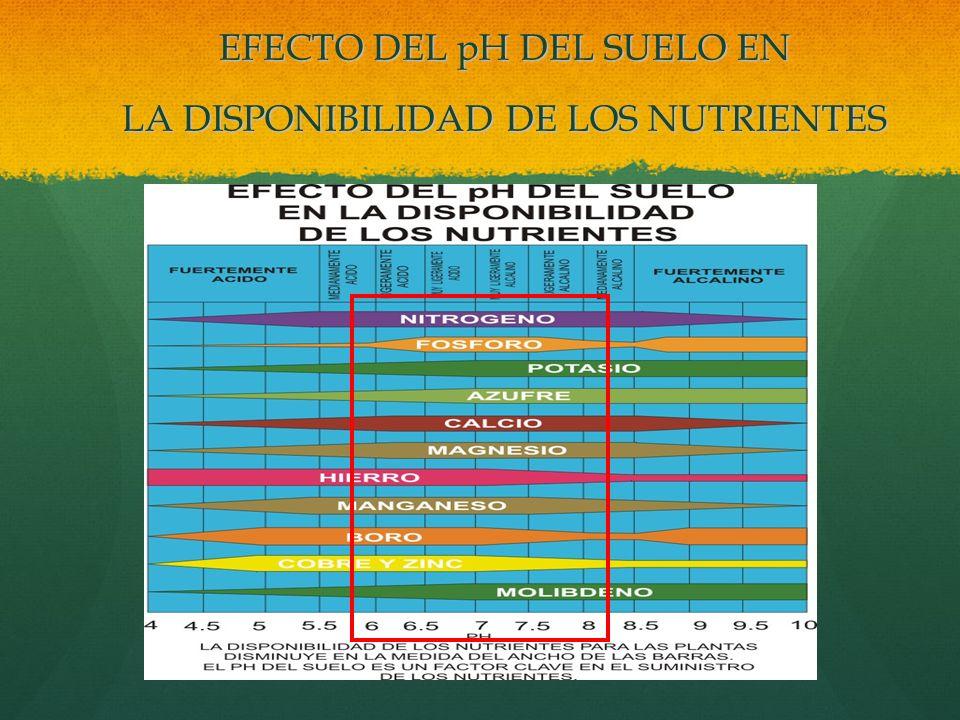 EFECTO DEL pH DEL SUELO EN LA DISPONIBILIDAD DE LOS NUTRIENTES