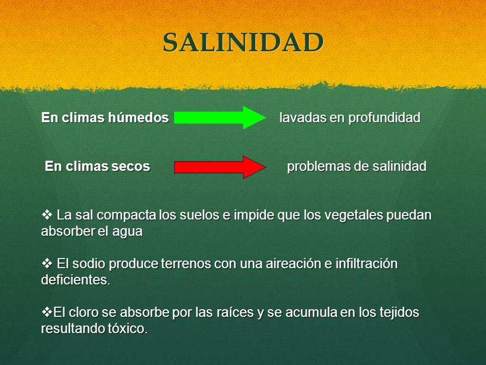 SALINIDAD En climas húmedos lavadas en profundidad En climas secos problemas de salinidad En climas secos problemas de salinidad La sal compacta los s