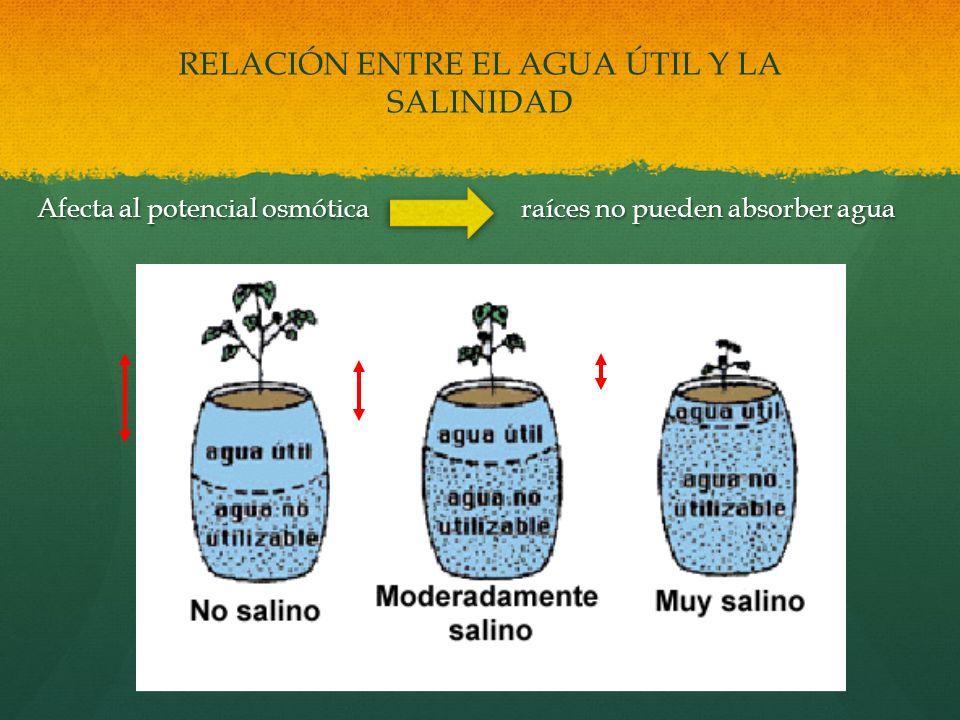 RELACIÓN ENTRE EL AGUA ÚTIL Y LA SALINIDAD Afecta al potencial osmótica raíces no pueden absorber agua Afecta al potencial osmótica raíces no pueden a