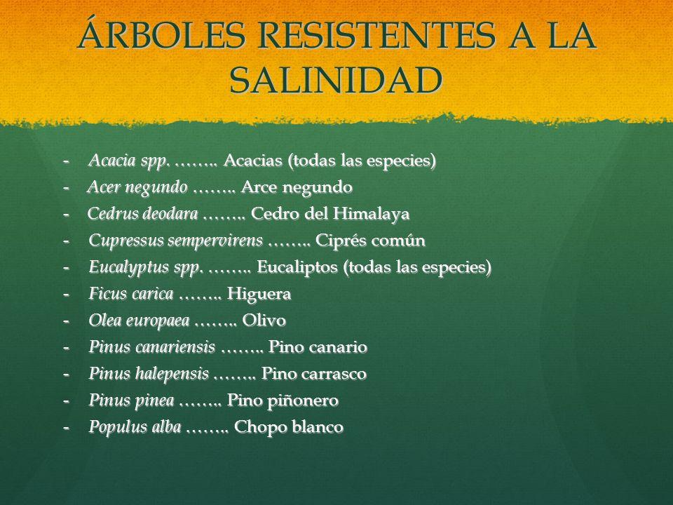 ÁRBOLES RESISTENTES A LA SALINIDAD - Acacia spp. …….. Acacias (todas las especies) - Acer negundo …….. Arce negundo - Cedrus deodara …….. Cedro del Hi