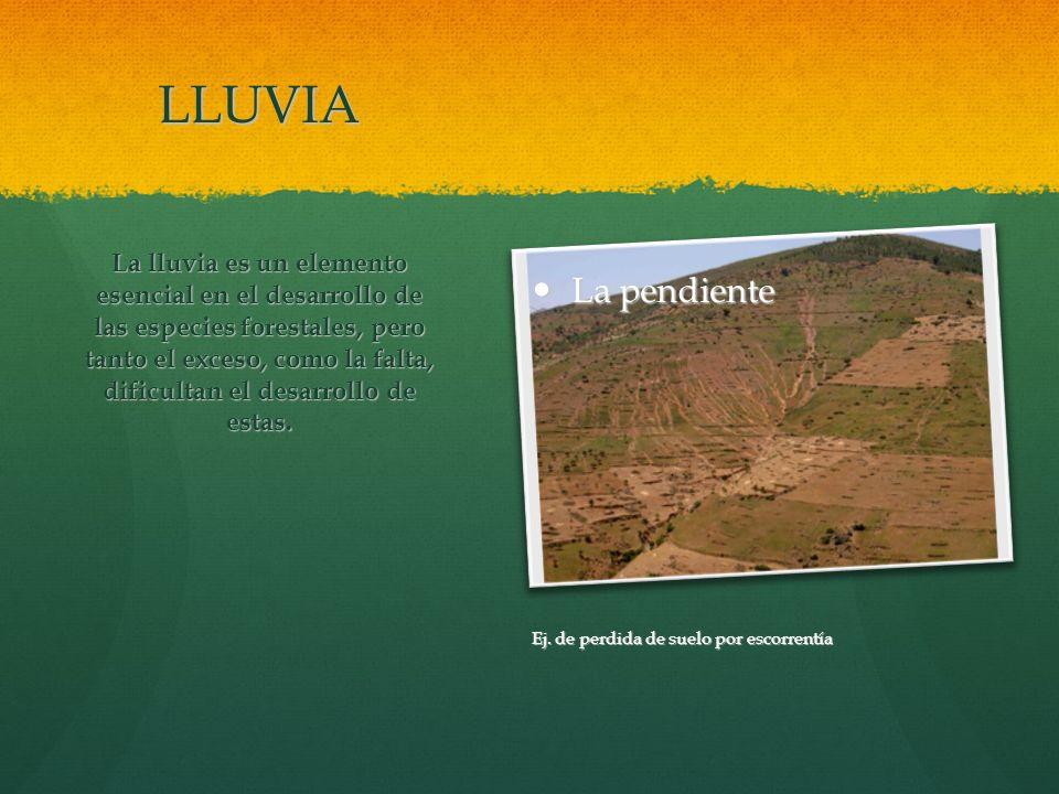 LLUVIA La lluvia es un elemento esencial en el desarrollo de las especies forestales, pero tanto el exceso, como la falta, dificultan el desarrollo de