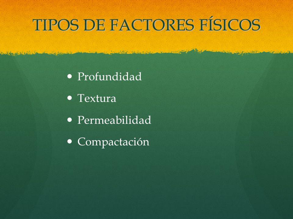 TIPOS DE FACTORES FÍSICOS Profundidad Textura Permeabilidad Compactación