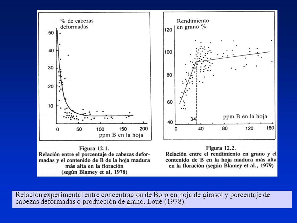 Relación experimental entre concentración de Boro en hoja de girasol y porcentaje de cabezas deformadas o producción de grano. Loué (1978). Relación e