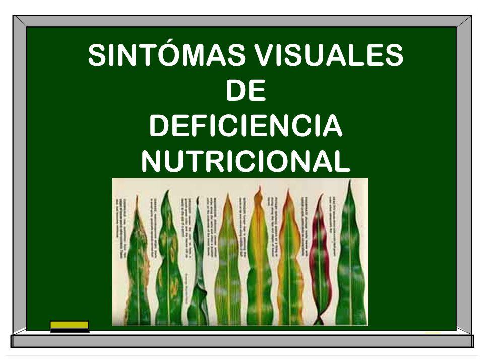 SINTÓMAS VISUALES DE DEFICIENCIA NUTRICIONAL