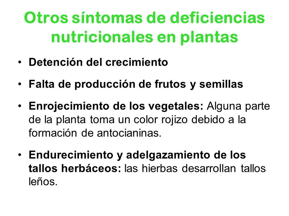 Detención del crecimiento Falta de producción de frutos y semillas Enrojecimiento de los vegetales: Alguna parte de la planta toma un color rojizo deb
