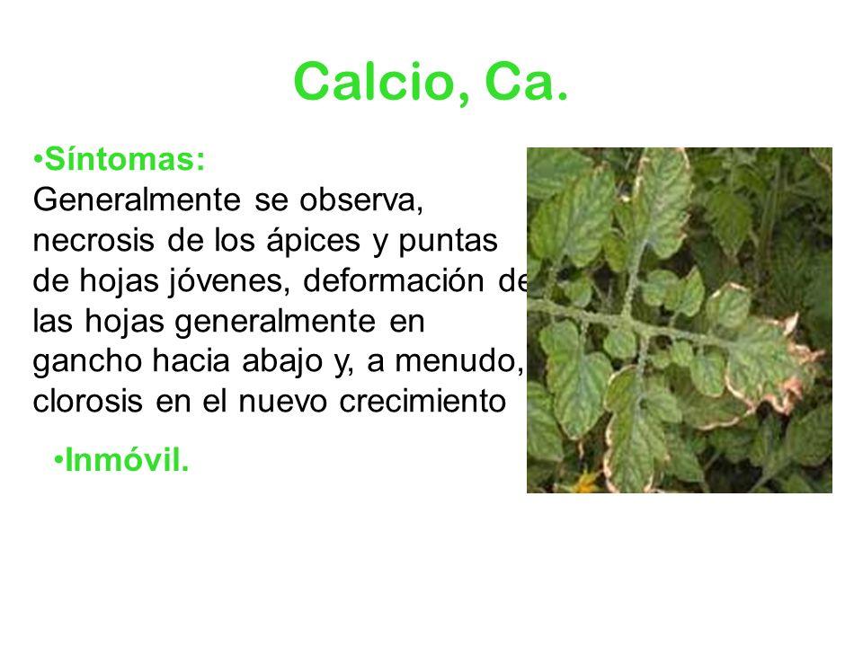 Calcio, Ca. Síntomas: Generalmente se observa, necrosis de los ápices y puntas de hojas jóvenes, deformación de las hojas generalmente en gancho hacia