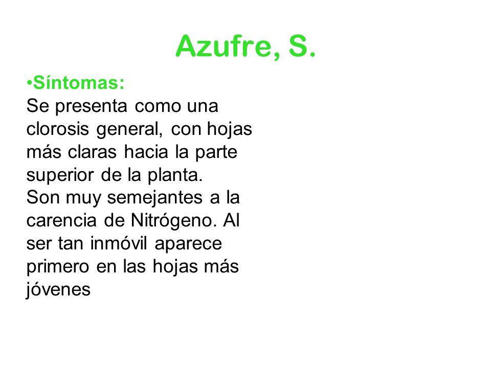 Azufre, S. Síntomas: Se presenta como una clorosis general, con hojas más claras hacia la parte superior de la planta. Son muy semejantes a la carenci