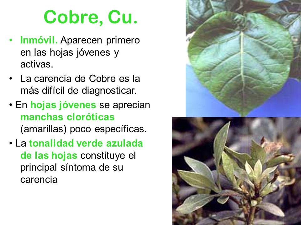 Cobre, Cu. Inmóvil. Aparecen primero en las hojas jóvenes y activas. La carencia de Cobre es la más difícil de diagnosticar. En hojas jóvenes se aprec