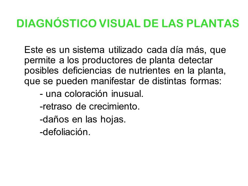 DIAGNÓSTICO VISUAL DE LAS PLANTAS Este es un sistema utilizado cada día más, que permite a los productores de planta detectar posibles deficiencias de
