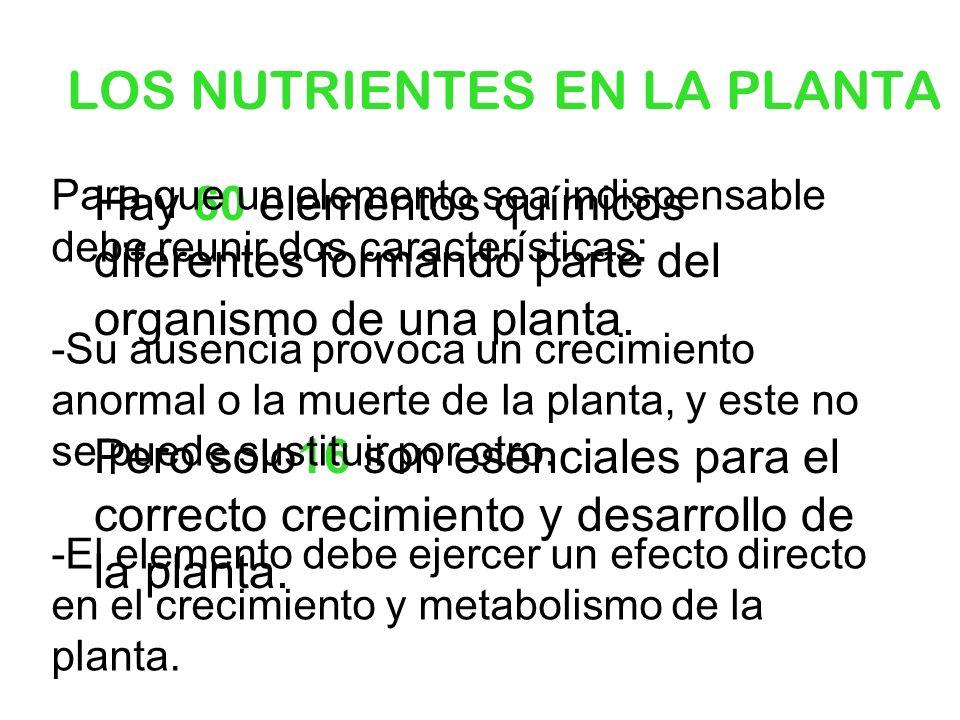 LOS NUTRIENTES EN LA PLANTA Hay 60 elementos químicos diferentes formando parte del organismo de una planta. Pero solo16 son esenciales para el correc