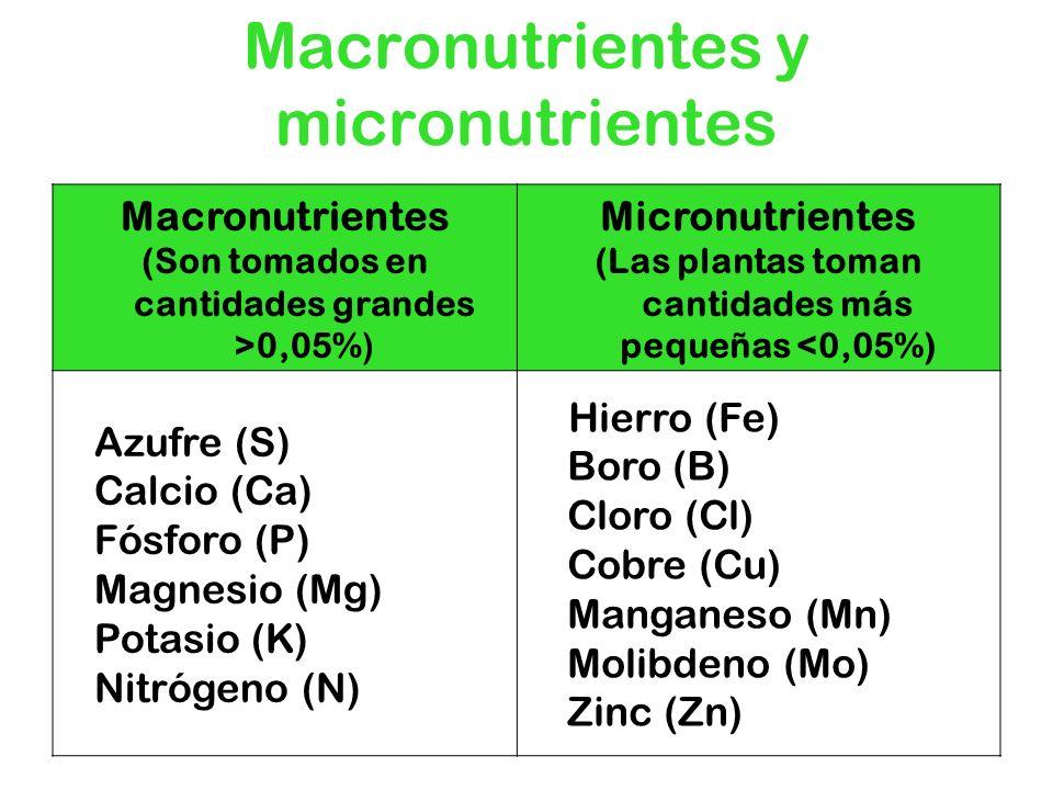 Macronutrientes y micronutrientes Macronutrientes (Son tomados en cantidades grandes >0,05%) Micronutrientes (Las plantas toman cantidades más pequeña