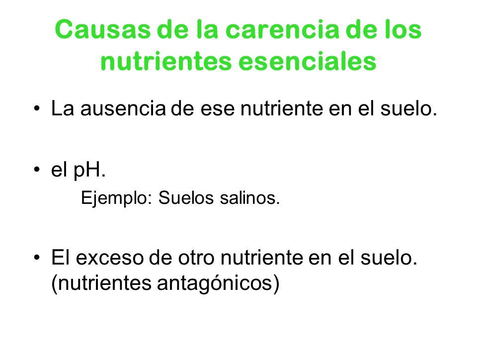 Causas de la carencia de los nutrientes esenciales La ausencia de ese nutriente en el suelo. el pH. Ejemplo: Suelos salinos. El exceso de otro nutrien