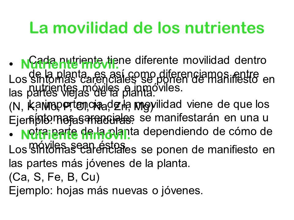 La movilidad de los nutrientes Cada nutriente tiene diferente movilidad dentro de la planta, es así como diferenciamos entre nutrientes móviles e inmó