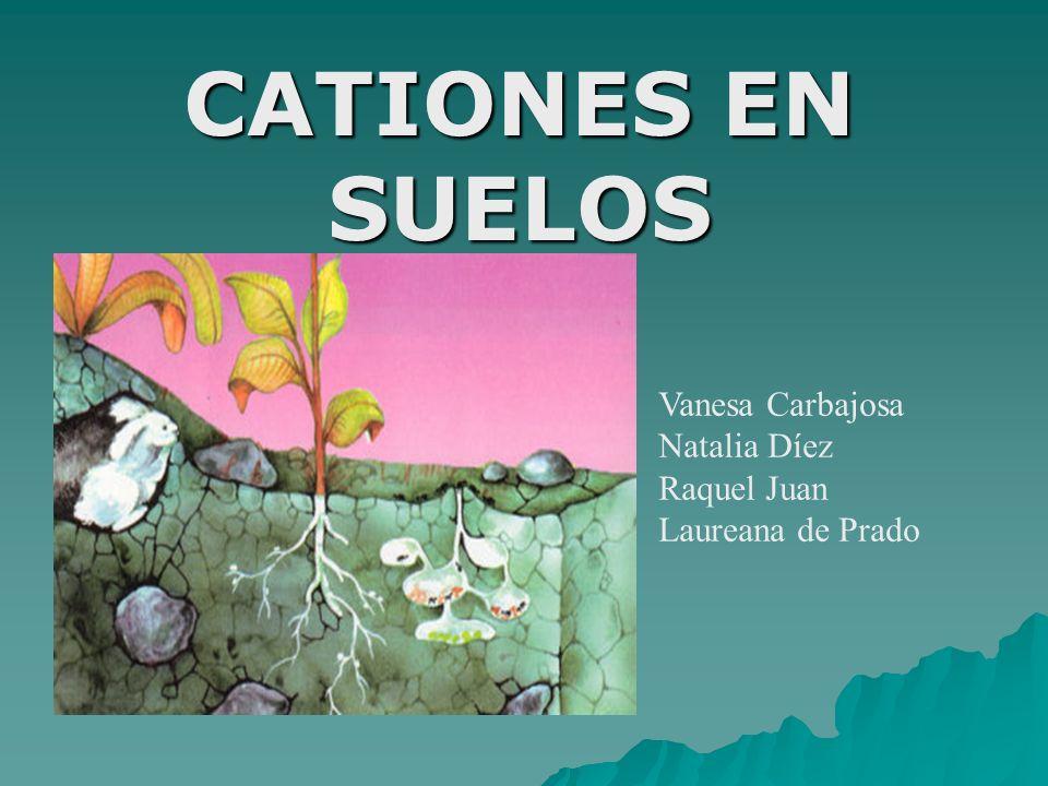 CATIONES EN SUELOS Vanesa Carbajosa Natalia Díez Raquel Juan Laureana de Prado