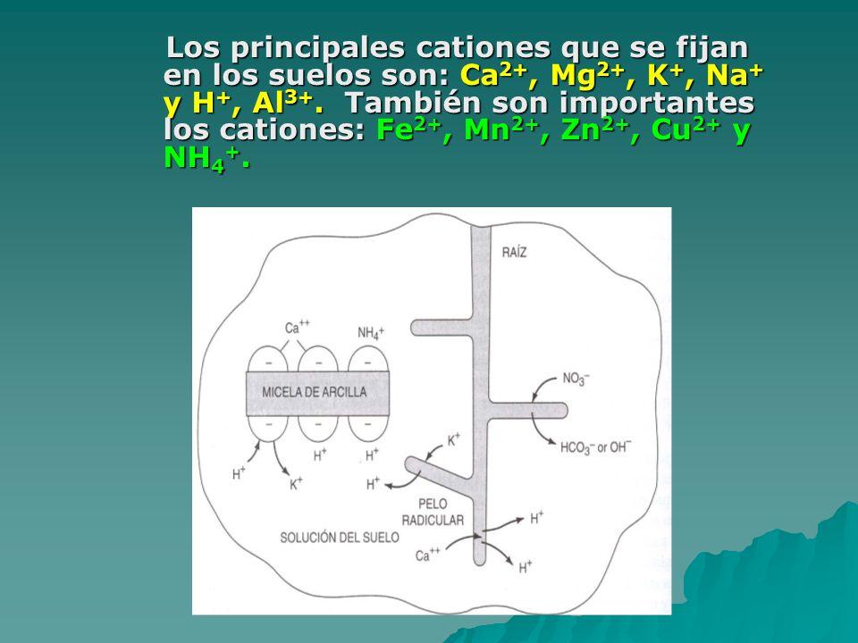 Los principales cationes que se fijan en los suelos son: Ca 2+, Mg 2+, K +, Na + y H +, Al 3+. También son importantes los cationes: Fe 2+, Mn 2+, Zn