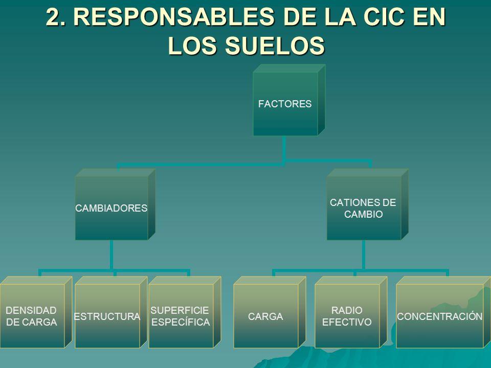 2. RESPONSABLES DE LA CIC EN LOS SUELOS FACTORES CAMBIADORES DENSIDAD DE CARGA ESTRUCTURA SUPERFICIE ESPECÍFICA CATIONES DE CAMBIO CARGA RADIO EFECTIV