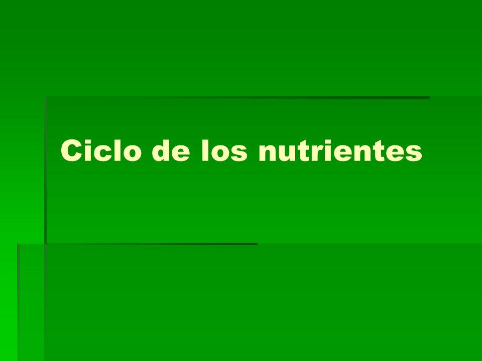 Ciclo de los nutrientes