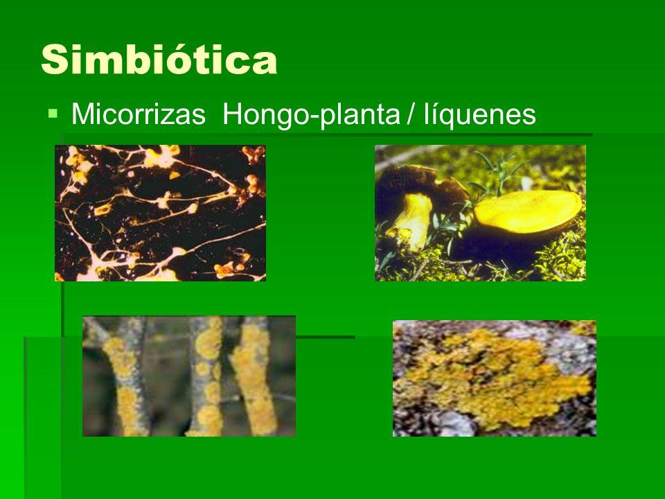 Simbiótica Micorrizas Hongo-planta / líquenes
