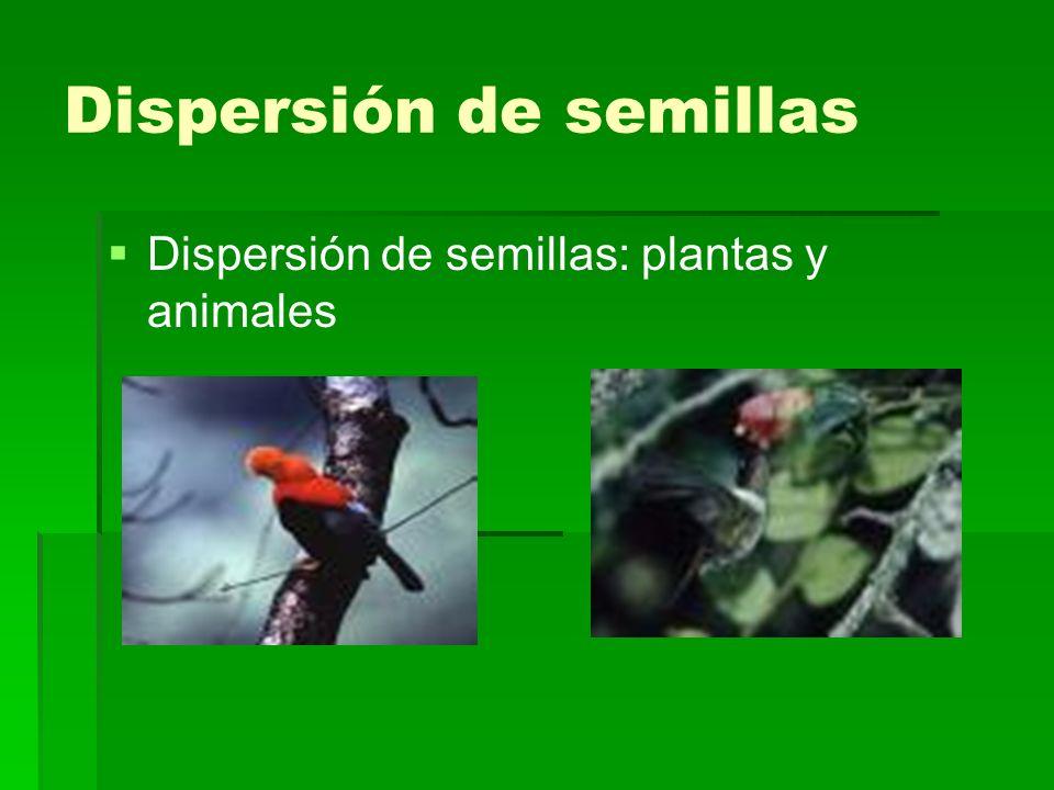 Dispersión de semillas Dispersión de semillas: plantas y animales