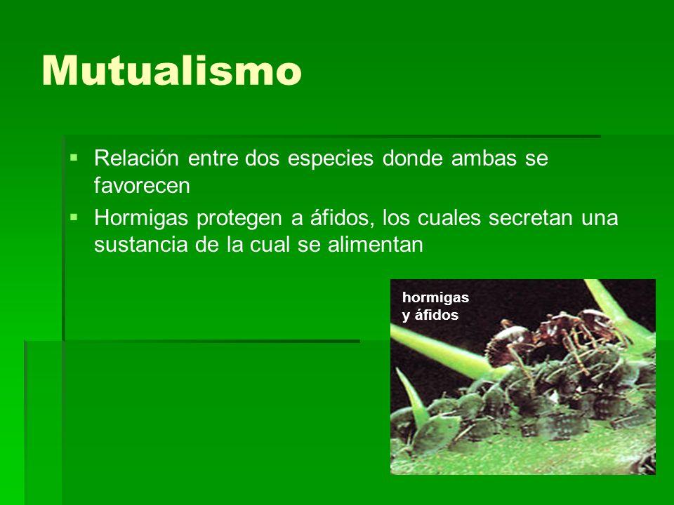 Mutualismo Relación entre dos especies donde ambas se favorecen Hormigas protegen a áfidos, los cuales secretan una sustancia de la cual se alimentan