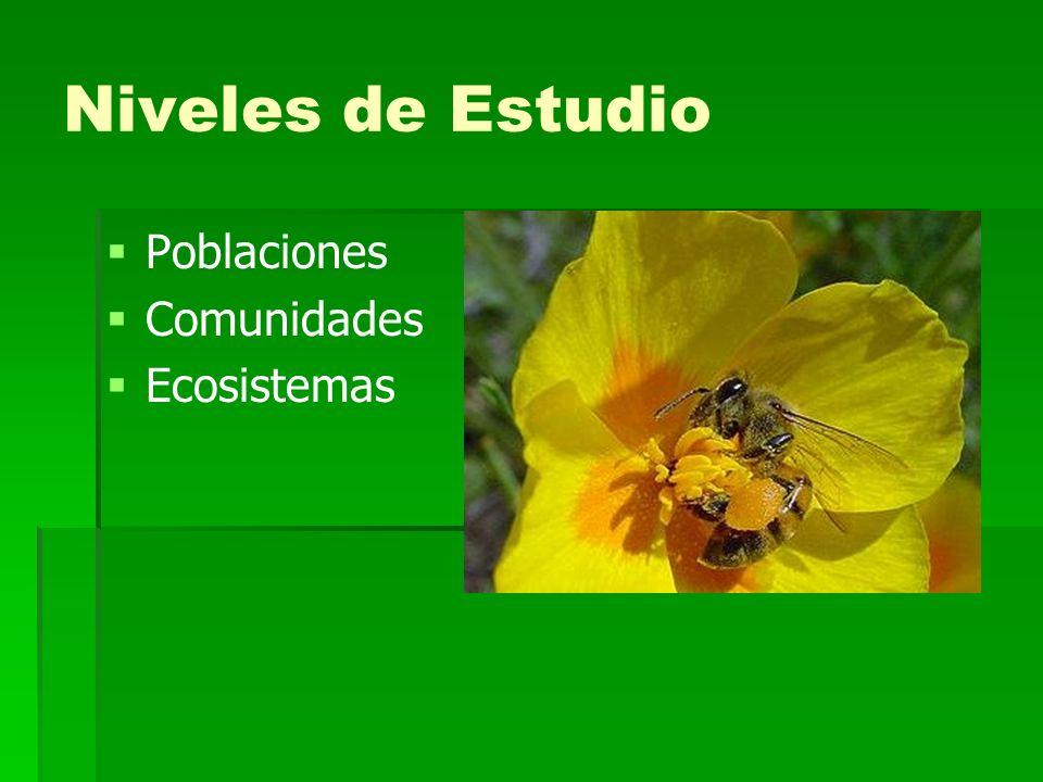 Niveles de Estudio Poblaciones Comunidades Ecosistemas