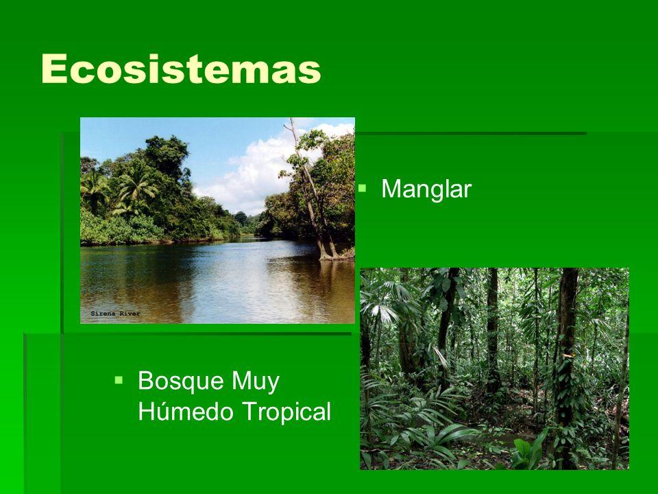 Ecosistemas Bosque Muy Húmedo Tropical Manglar