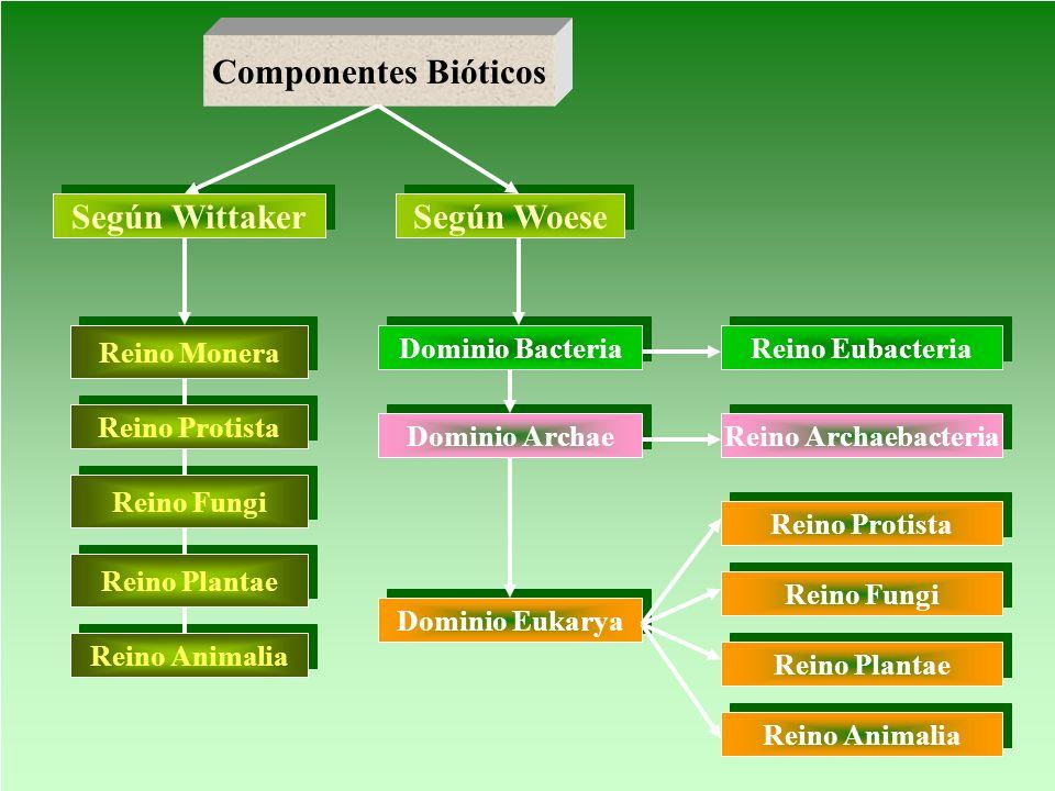 Componentes Bióticos Según Wittaker Según Woese Reino Monera Reino Protista Reino Fungi Reino Plantae Reino Animalia Dominio Bacteria Dominio Archae D