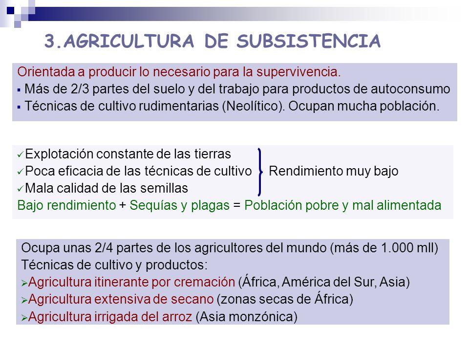 3.AGRICULTURA DE SUBSISTENCIA Ocupa unas 2/4 partes de los agricultores del mundo (más de 1.000 mll) Técnicas de cultivo y productos: Agricultura itin