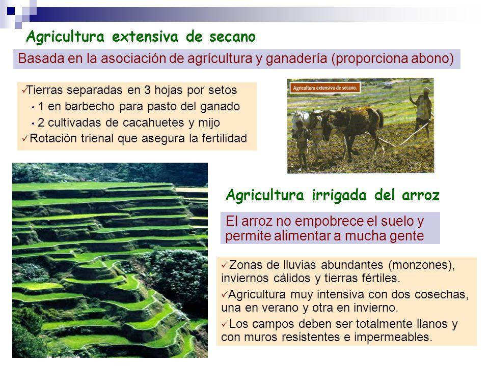 Agricultura extensiva de secano Basada en la asociación de agrícultura y ganadería (proporciona abono) Tierras separadas en 3 hojas por setos 1 en bar