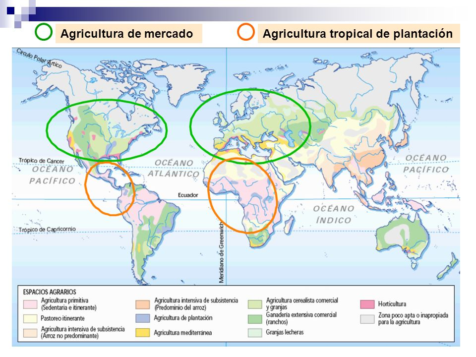 Agricultura de mercadoAgricultura tropical de plantación