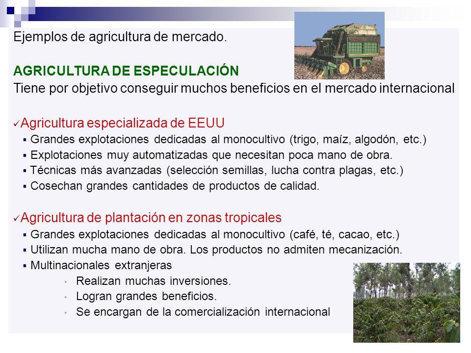 Ejemplos de agricultura de mercado. AGRICULTURA DE ESPECULACIÓN Tiene por objetivo conseguir muchos beneficios en el mercado internacional Agricultura