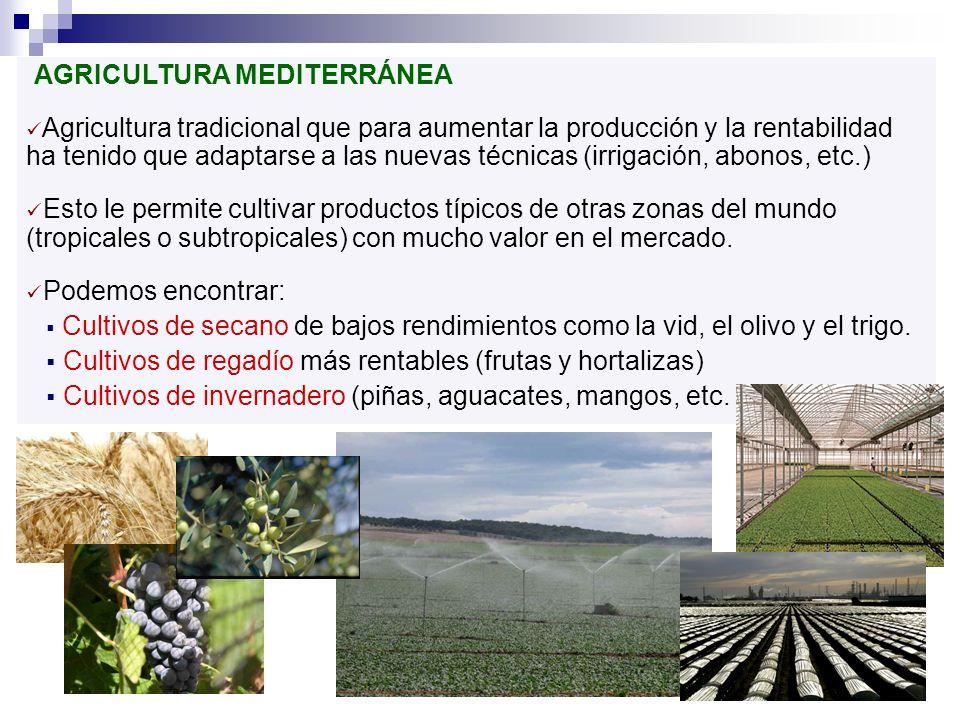 AGRICULTURA MEDITERRÁNEA Agricultura tradicional que para aumentar la producción y la rentabilidad ha tenido que adaptarse a las nuevas técnicas (irri