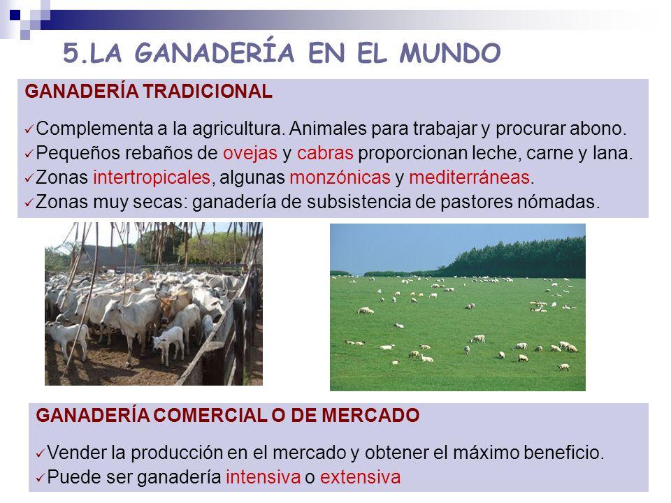 5.LA GANADERÍA EN EL MUNDO GANADERÍA TRADICIONAL Complementa a la agricultura. Animales para trabajar y procurar abono. Pequeños rebaños de ovejas y c