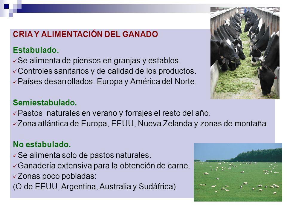 CRIA Y ALIMENTACIÓN DEL GANADO Estabulado. Se alimenta de piensos en granjas y establos. Controles sanitarios y de calidad de los productos. Países de