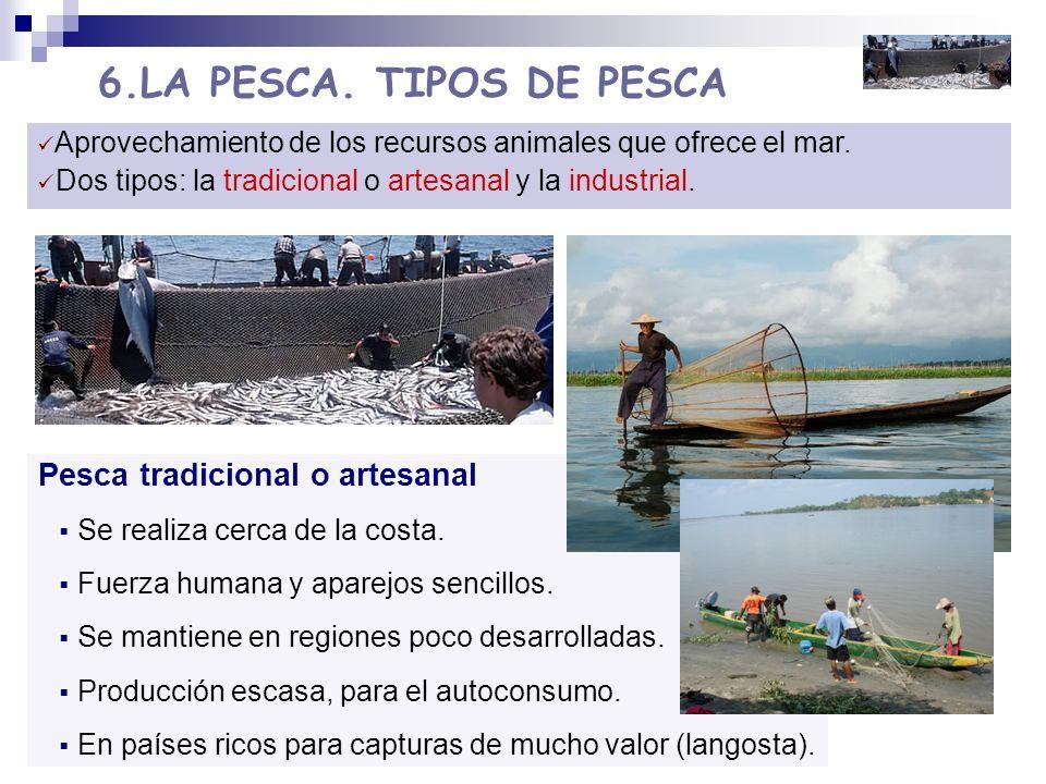 6.LA PESCA. TIPOS DE PESCA Aprovechamiento de los recursos animales que ofrece el mar. Dos tipos: la tradicional o artesanal y la industrial. Pesca tr