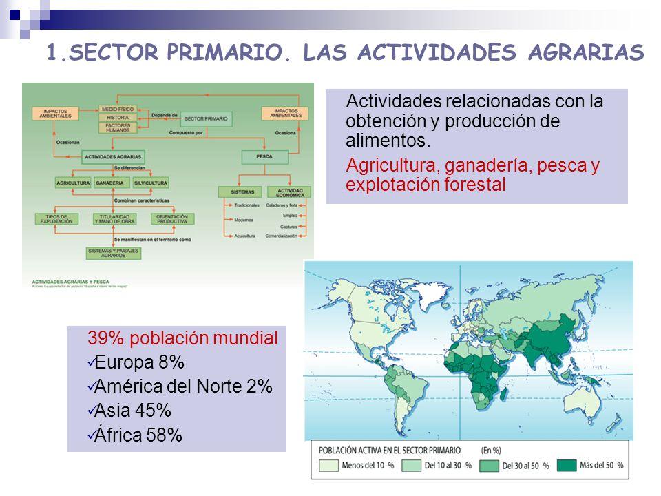 1.SECTOR PRIMARIO. LAS ACTIVIDADES AGRARIAS 39% población mundial Europa 8% América del Norte 2% Asia 45% África 58% Actividades relacionadas con la o