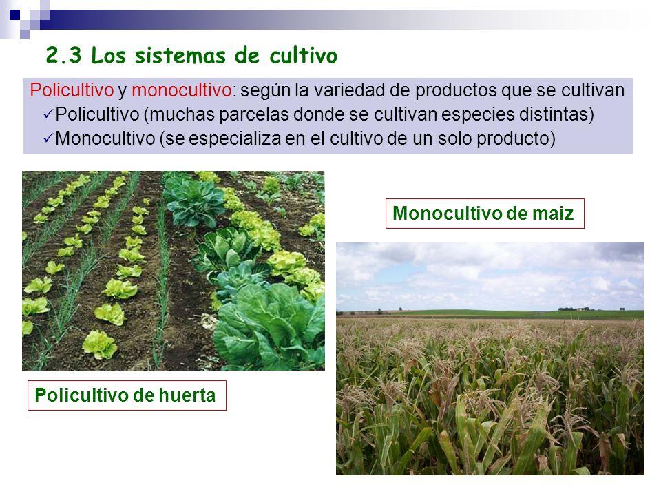 Policultivo y monocultivo: según la variedad de productos que se cultivan Policultivo (muchas parcelas donde se cultivan especies distintas) Monoculti