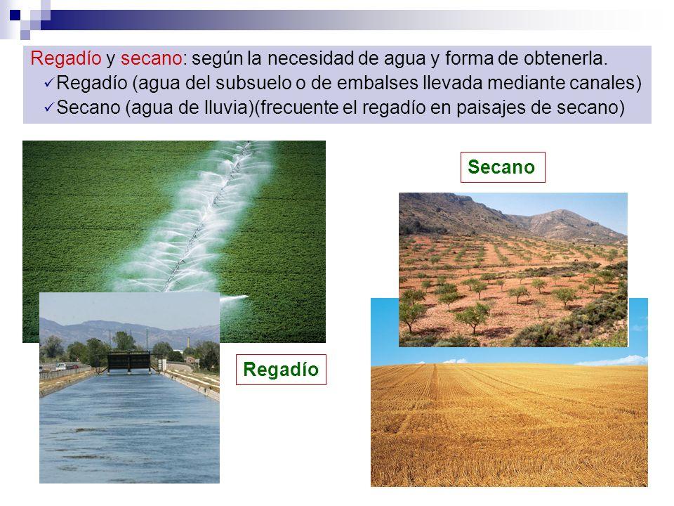 Regadío y secano: según la necesidad de agua y forma de obtenerla. Regadío (agua del subsuelo o de embalses llevada mediante canales) Secano (agua de