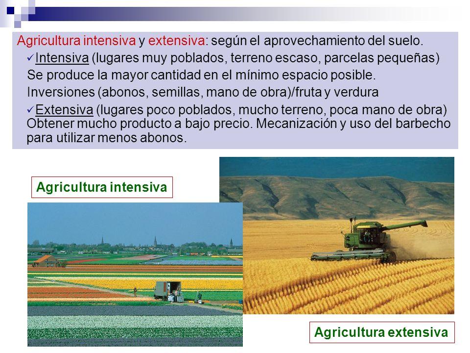 Agricultura intensiva y extensiva: según el aprovechamiento del suelo. Intensiva (lugares muy poblados, terreno escaso, parcelas pequeñas) Se produce