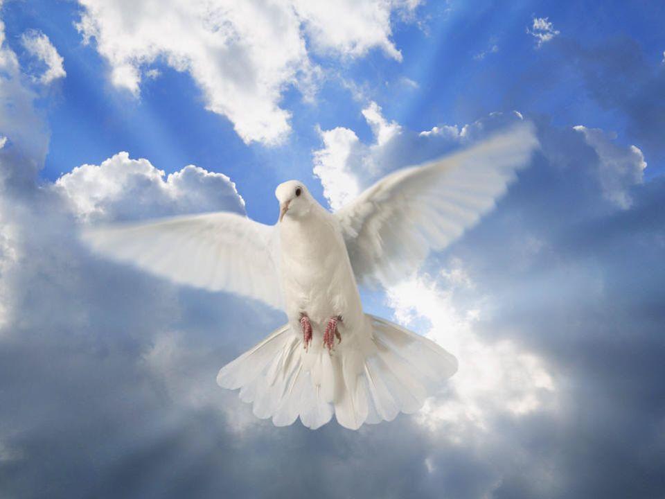 Hay Un Camino Hay un camino, hay un camino Y es la única verdad Hay un camino, hay un camino Y la vida te dará Se llama Jesucristo, Jesucristo Se llama Jesucristo es la verdad Se llama Jesucristo, Jesucristo Y la vida te dará