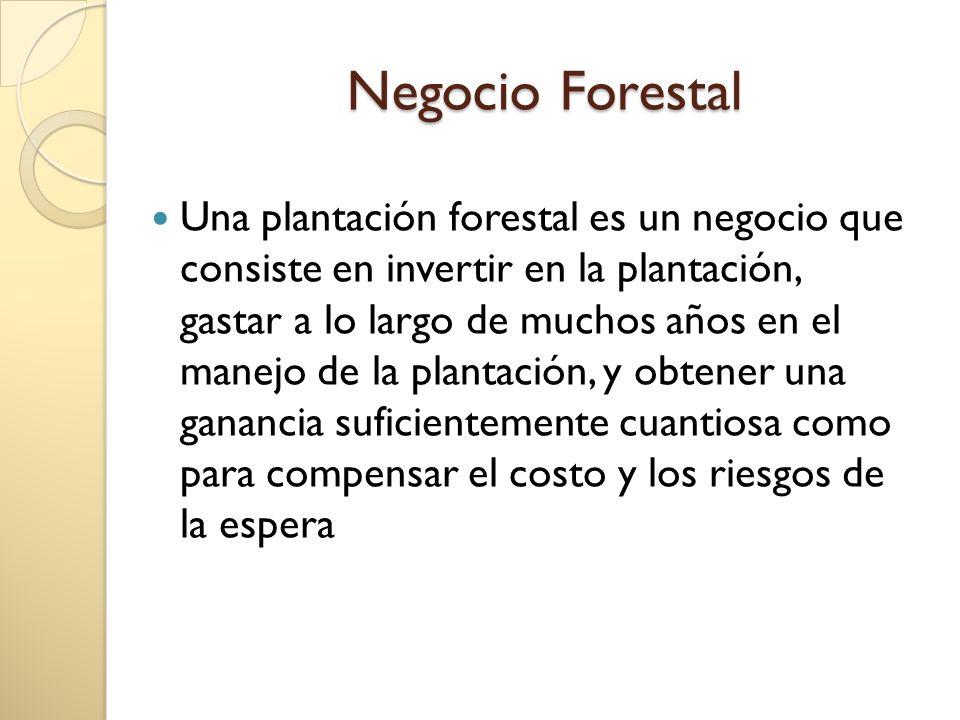Negocio Forestal Una plantación forestal es un negocio que consiste en invertir en la plantación, gastar a lo largo de muchos años en el manejo de la