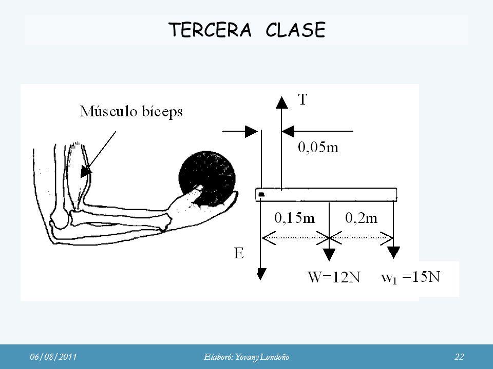 TERCERA CLASE Músculo bíceps 06/08/2011Elaboró: Yovany Londoño22