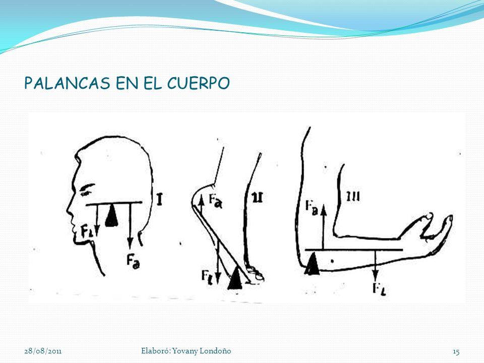 PALANCAS EN EL CUERPO 28/08/2011Elaboró: Yovany Londoño15